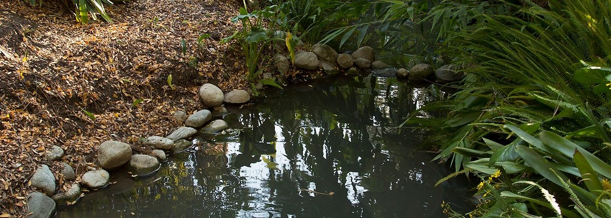 Mildred E. Mathias Botanical Garden. You Are Here: Home / Mildred E. Mathias  Botanical Garden